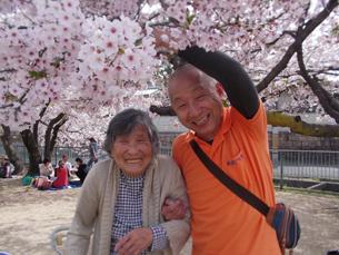 桜満開 - (福)健康会